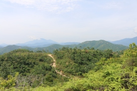 The original forests have mostly been cleared and replaced with oil palm plantations and other forestry products.