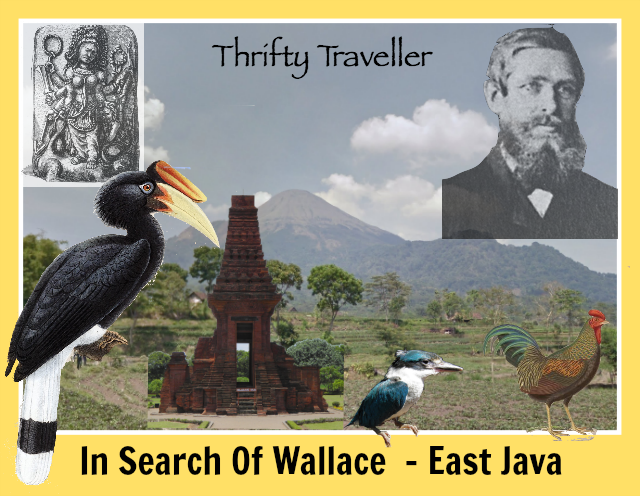 in-search-of-wallace-east-java