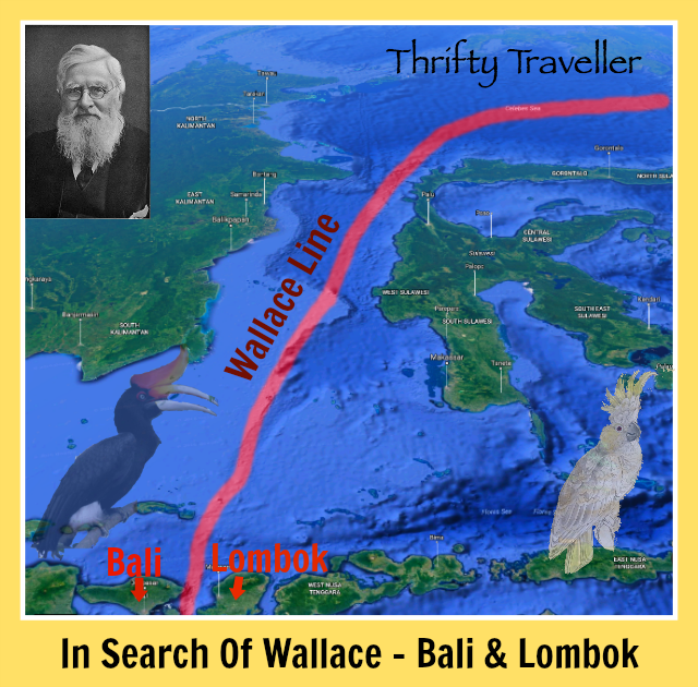 in-search-of-wallace-bali-lombok