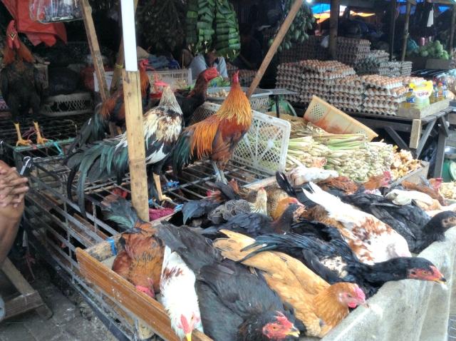 ChickenStallMakassar