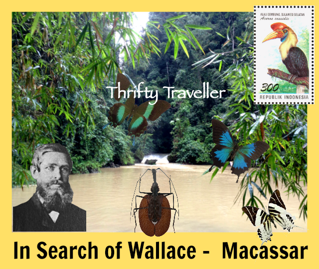 In-Search-of-Wallace-Macassar